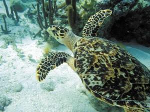 GP-turtles-HB-treat-2