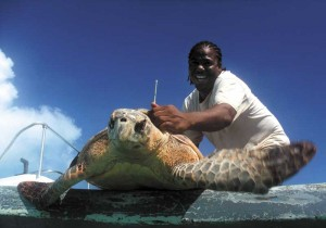 DECR Officer Tommy Philips releases Jerry, the adult male Hawksbill