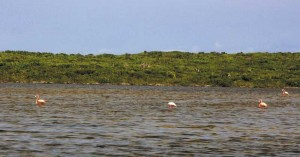 View of flamingos from causeway connecting North and Middle Caicos