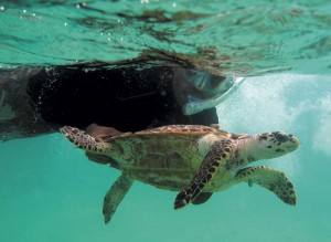 TCI Turtle Project