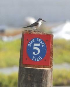 Grand Turk Bird Trail