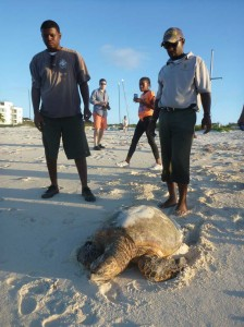 Endangered turtle returns to sea