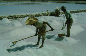 Toiling in the salt ponds