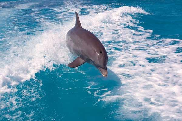 dolphin s 100 avis