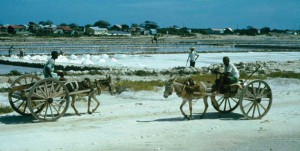 1960s image of the last days of Grand Turk's salt industry; carousel windmill in the background