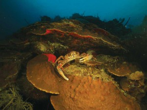 Healthy reef systems support millions of species of marine life.