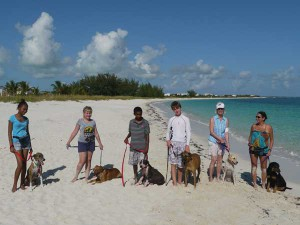 A Pampered Paws obedience class on the beach.