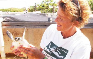 Liz Cunningham takes a look at a sea turtle hatchling in the TCI.