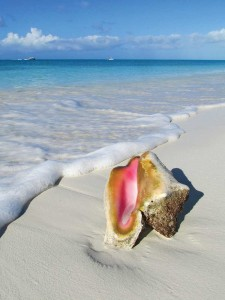 The conch's significance to TCI is huge.