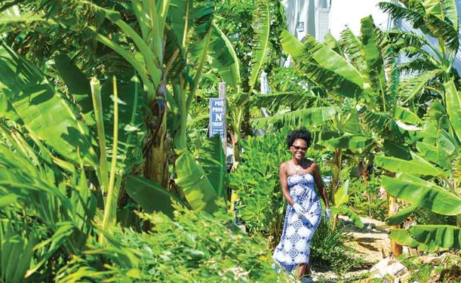 Chef Irie Dawta has a lush backyard garden in the heart of Providenciales.