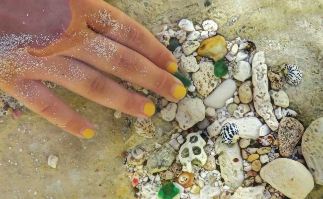 Taking a close look into shallow waters reveals a treasure trove of tiny discoveries.